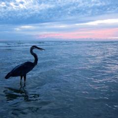 Fisherman at sunset. Redington Beach, Florida. 2012.