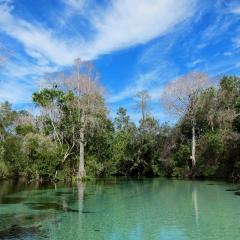 Weeki Wachee River, Florida. 2013.