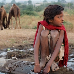 Camel watering helper. Pushkar, Rajasthan, India. 2014.