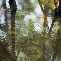 Weedon Island mangroves. St. Petersburg, Florida. 2011.