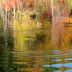 Walden Pond fall foliage. Concord, Massachusetts. 2012.